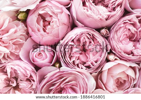 Delicate blossoming pink flowers, blooming roses festive background, bouquet pastel floral card, toned, selective focus Royalty-Free Stock Photo #1886416801