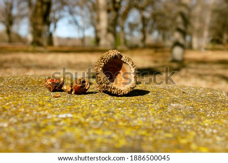 This is a picture of an acorn on a concrete seat.