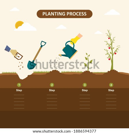 Planting seed sprout in ground. How to grow tree from the seed in the garden easy step by step. Apple tree, gardening seedling plant. Vector infographic concept of planting process in flat design Royalty-Free Stock Photo #1886594377