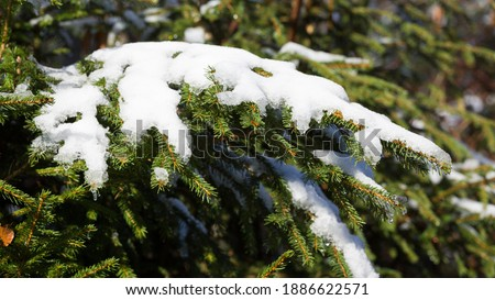 Snow-covered branch of a conifer tree. Symbol for winter and christmas. Panorama format. Royalty-Free Stock Photo #1886622571