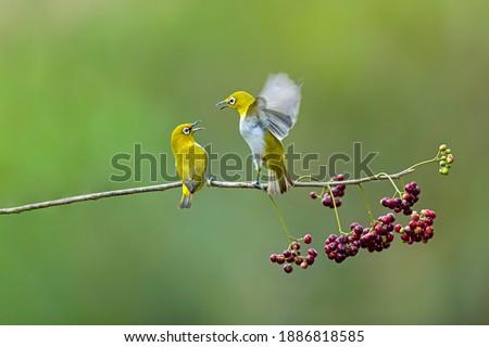 A beautiful bird on a beautiful perch...