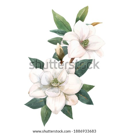 Beautiful stock illustration with hand drawn watercolor gentle white magnolia flowers.