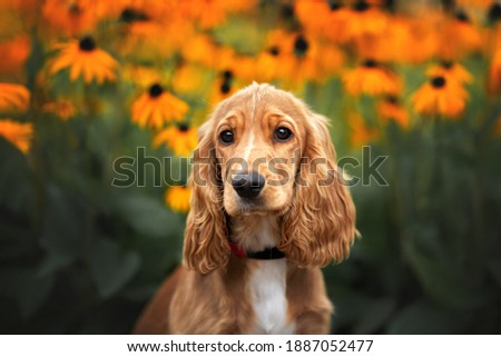 english cocker spaniel puppy portrait in summer with blooming flowers on the background Royalty-Free Stock Photo #1887052477