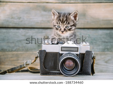 Little cute kitten with vintage photo camera on a wooden table