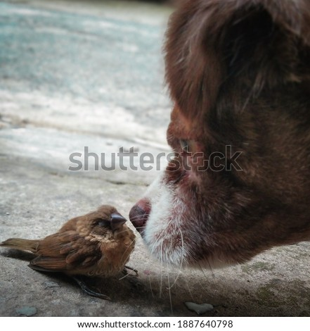 a cute picture of a dog and a sleepy little sparrow