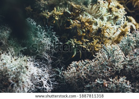 Natural composition card with forest moss and spruce evergreen twigs,  abstract textures and materials of nature flora background Royalty-Free Stock Photo #1887811318