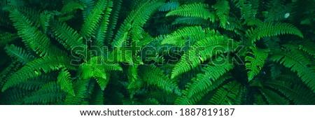 Fern Nature Background, Fern Leaf Pattern, Lush Fresh Green Foliage, Floral Fern Background Royalty-Free Stock Photo #1887819187