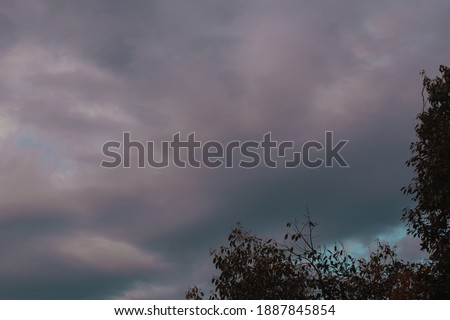 picture of pink clouds and tree leaves.