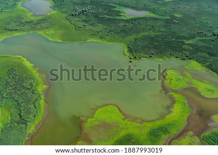 Aerial view of a nature reserve area with swamp, water, green grass and trees in The Netherlands. It is located in lake Oostvaardersplassen between Almere and Lelystad. Royalty-Free Stock Photo #1887993019
