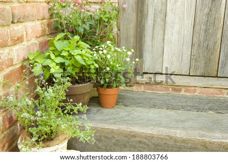 Potted herb of sweet marjoram and Japanese mint #188803766