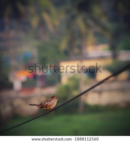 It is a picture of a bird which is known as sparrow which is standing on a wire and spectating the area.
