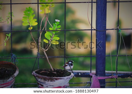 The sparrow and the flower plant.The beautiful scenery of nature contains in one picture