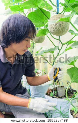 Use soil PH meter for check the PH value of melon tree
