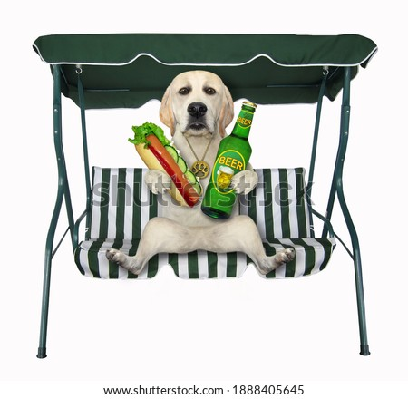 A dog with a bottle of beer and a hot dog sits on a beach swing chair. White background. Isolated.