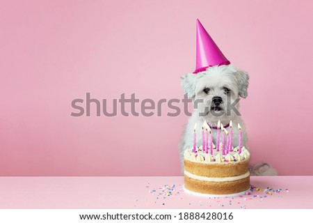 Cute white dog with birthday cake and pink candles against a pink background Royalty-Free Stock Photo #1888428016