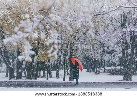A person wondering around, Hikarigaoka park, Tokyo during extreme weather: Cherry blossoms in full bloom are covered in snow in April.   Royalty-Free Stock Photo #1888518388