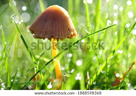 One wild mushroom, Closeup Of Yellow And Orange Poisonous,  Picture Of A Wild Mushroom On A Wood Background, strong, not alone, inspiring