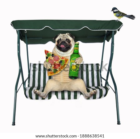 A pug dog with a bottle of beer and a slice of pizza sits on a beach swing chair. White background. Isolated.