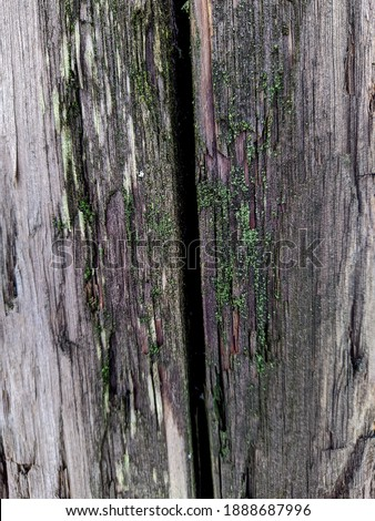 texture and background of old and wet wood plank cracked in the middle