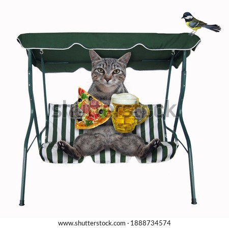 A gray cat with a mug of beer and a slice of pizza sits on a beach swing chair. White background. Isolated.