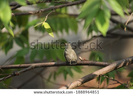 Picture of a sparrow in the morning.