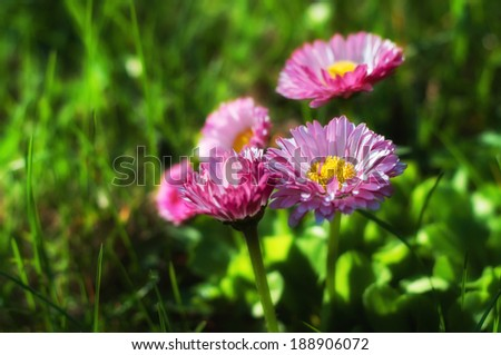 Pink daisies on a green background #188906072