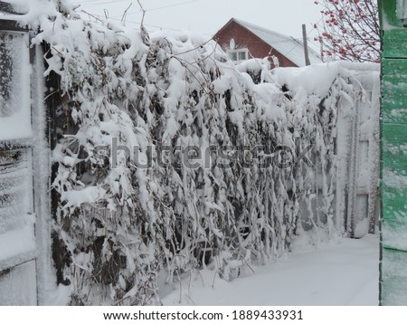 Winter picture after a blizzard, covered with snow