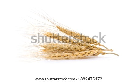 barley grains isolated on white background Royalty-Free Stock Photo #1889475172