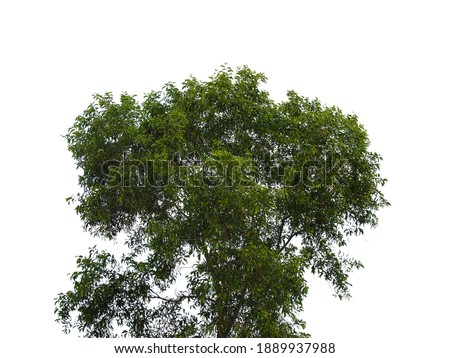 Isolated tree on white background.Enter Paths Photoshop
