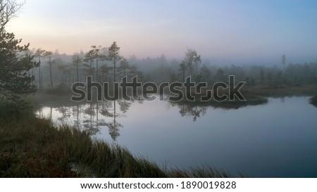 swamp lake, misty bog landscape with swamp pines and traditional bog vegetation, fuzzy background, fog in bog, dusk, Dikli, Madiesenu bog, Latvia