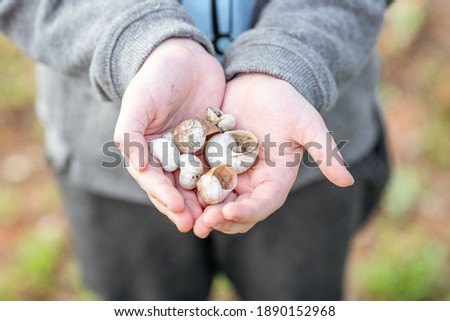 Shells on the forest.Empty snail shells in woman's hand. Collecting empty shells, taking shells from the forest. Environmental issues, climate crisis concept. Royalty-Free Stock Photo #1890152968