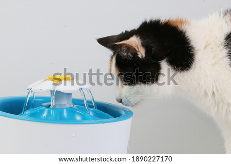 tricolored cat drinks fresh water from an electric drinking fountain  Royalty-Free Stock Photo #1890227170