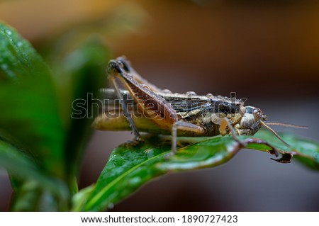grasshopper perched on a leaf with dew drops