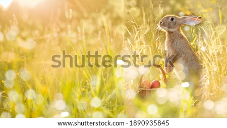 Easter bunny with a basket of eggs. Happy Easter Bunny on a card on their hind legs with flowers at sunset. Cute hare Royalty-Free Stock Photo #1890935845
