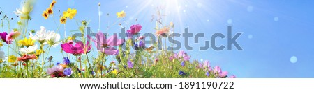 Colorful flower meadow with sunbeams and bokeh lights in summer - nature background banner with copy space Royalty-Free Stock Photo #1891190722