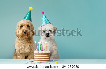 Two cute dogs with party hats and birthday cake Royalty-Free Stock Photo #1891339060