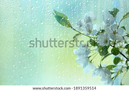 spring flowers rain drops, abstract blurred background flowers fresh rain Royalty-Free Stock Photo #1891359514
