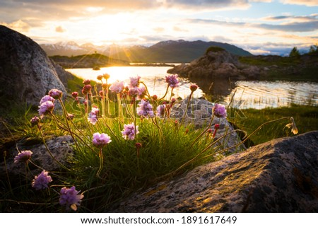 Flowers growing out of rock at an idyllic lake in front of a beautiful sunset in northern norway Royalty-Free Stock Photo #1891617649