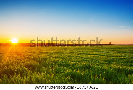 Image of green grass field and blue sky #189170621