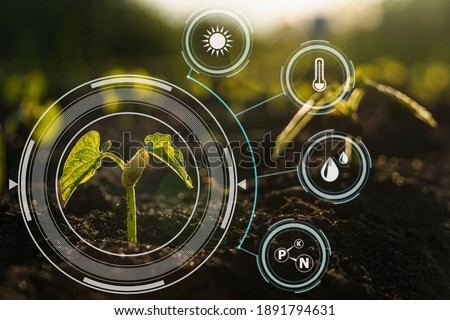 Plant sprout growing in soil with icon energy sources on a picture for environmental or smart farm concept.