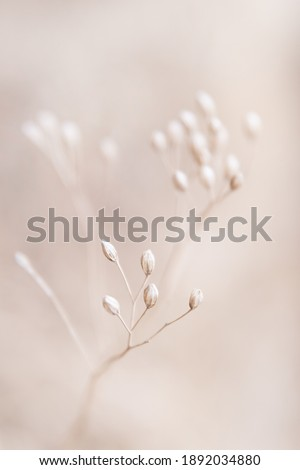Dry flowers plant floral branch on soft beige pastel background. Blurred selective focus. Pattern with neutral natural colors. Royalty-Free Stock Photo #1892034880