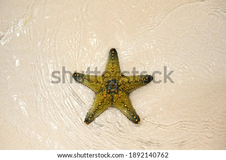 A beautiful yellow starfish lies on the white sand and is washed by the clear, transparent and warm waves of the ocean. A live starfish washed up on the beach. Yellow-green five-pointed star Royalty-Free Stock Photo #1892140762