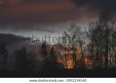 Golden hour with fire clouds. Beautiful sunset with trees. #1892254540