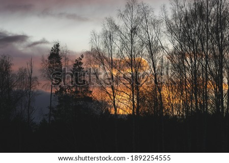 Golden hour with fire clouds. Beautiful sunset with trees. #1892254555