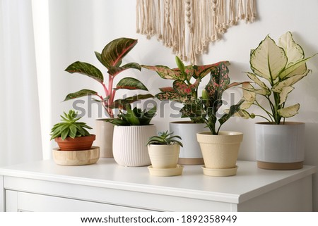 Exotic houseplants with beautiful leaves on chest of drawers at home Royalty-Free Stock Photo #1892358949