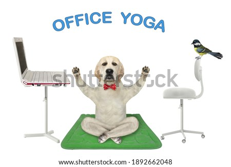 A dog is doing yoga exercises on a green fitness mat near a laptop. Office  yoga. White background. Isolated.