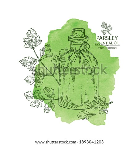 Watercolor background with parsley: parsley leaves, plant and bottle of parsley essential oil. Cosmetic, perfumery and medical plant. Vector hand drawn illustration. #1893041203