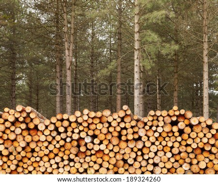 Close up of large pile of cut timber with fir trees #189324260