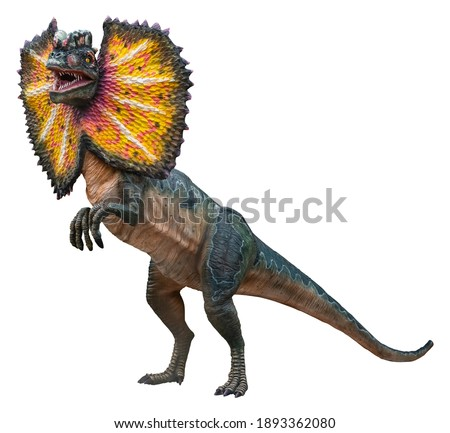 Dilophosaurus (Male) is a carnivore genus of theropod dinosaur that lived during the Early Jurassic, Dilophosaurus isolated on white background with a clipping path Royalty-Free Stock Photo #1893362080