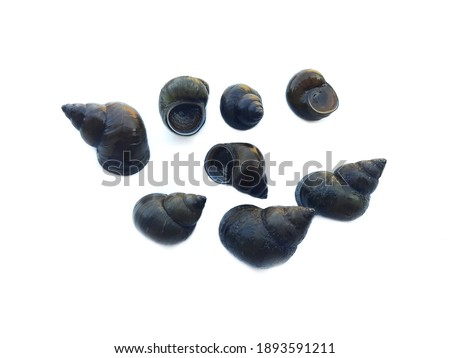 Thai river mollusks that live in freshwater or River snails on white background. Edible and economic agriculture products that some Thai farmers make the mollusks farm for sell to the restaurants.  Royalty-Free Stock Photo #1893591211
